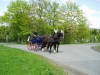 Kutschen Rundfahrten am Rhein