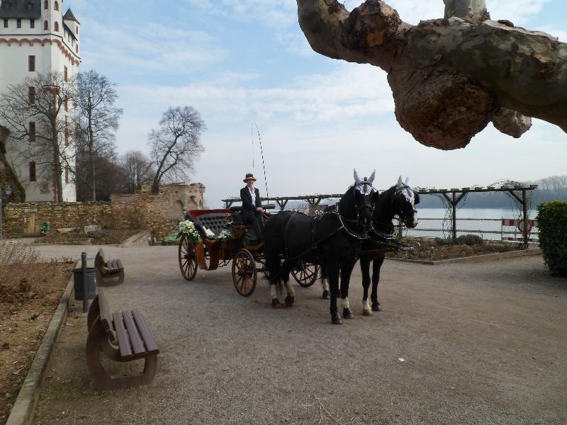 Rheingauer-Kutschfahrten - Hochzeitskutsche, Planwagenfahrt