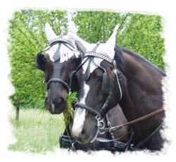 Kutsche Pferde